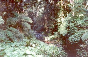 Sub-tropical rainforest, Border Ranges National Park