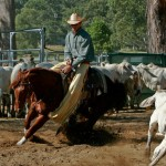 Photo Dalman Cutting Horse