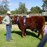 Zac Reid with Nigel Champion Steer