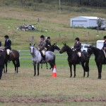 horse_8993